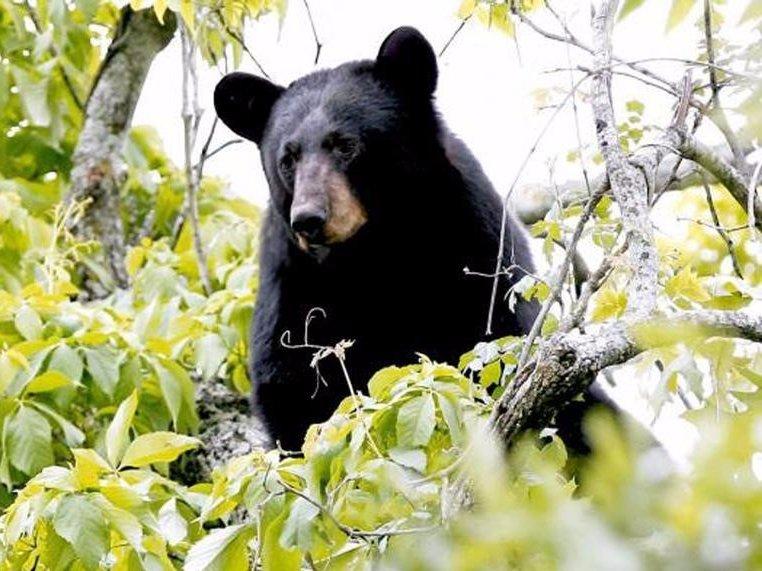 A black bear in Louisiana | Thomson Reuters