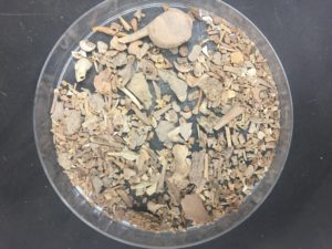 Woah. Fossils